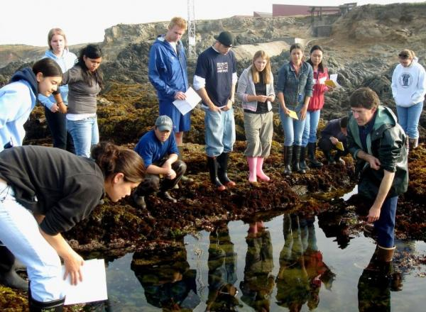 UC Davis Associate Professor Eric Sanford works in the field with students at the Bodega Marine Laboratory. (UC Davis)