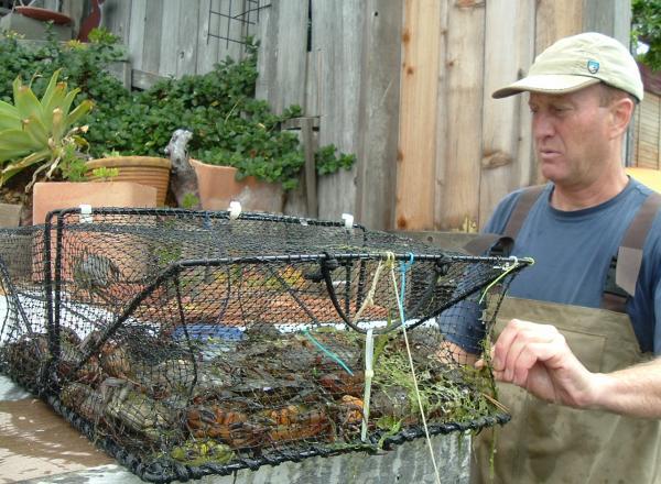 UC Davis Professor Edwin Grosholz holds a trap of invasive European green crabs at Seadrift Lagoon near Stinson Beach in California. (Courtesy Edwin Grosholz/UC Davis)